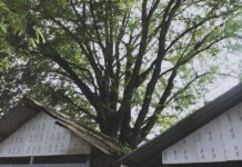 Don't Let Trees Damage Your Roofing in Plymouth Michigan